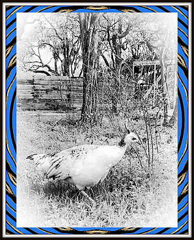 Peahen by Constance Lowery