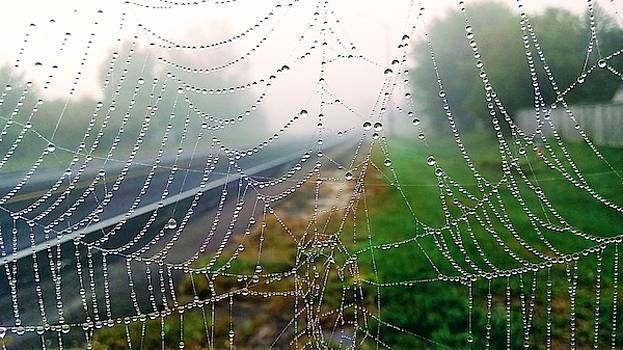 Pearls in a Web by Iris Russak