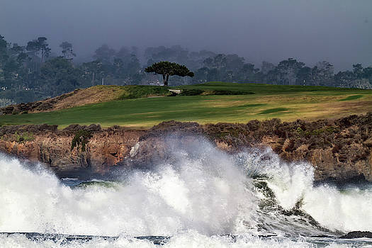 Pebble Beach Oak by TB Sojka
