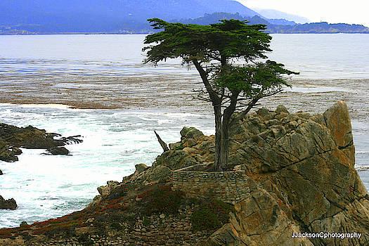 Pebble Beach Tree by Jonathan Jackson Coe