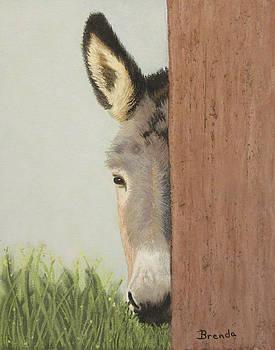 Peeking Jack by Brenda Maas