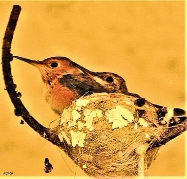 Peeking Mum n Chick by John R Williams