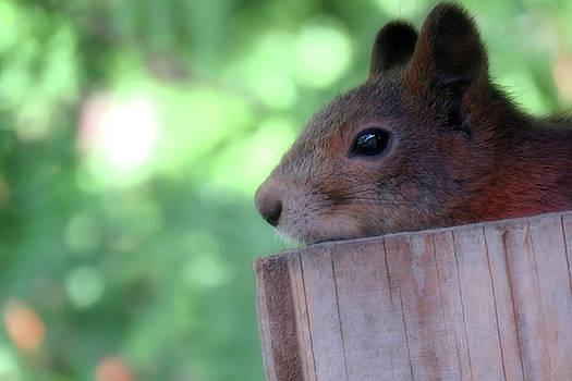 Peeking Out From The Summer House by Johanna Hurmerinta