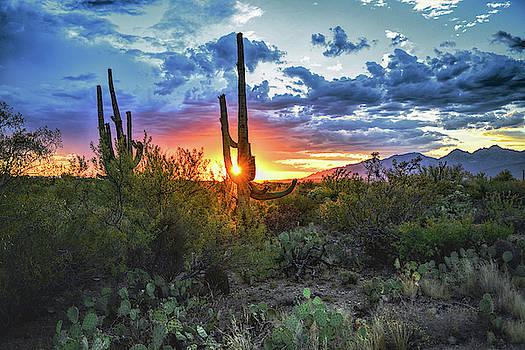 Chance Kafka - Tucson, Arizona Saguaro Sunset