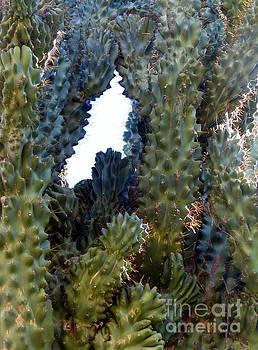 Peeking Through Cactus by Rosanne Licciardi