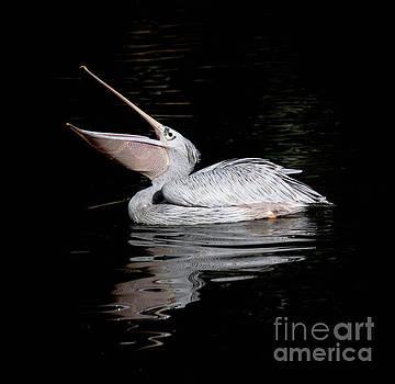 Pelican - 8352a by Debra Kewley
