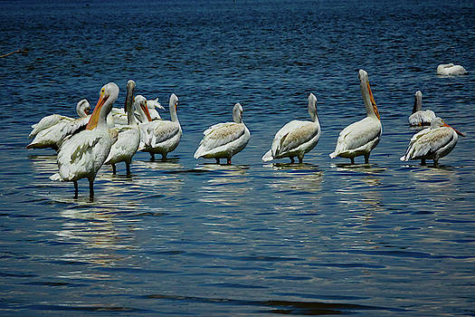 Pelican Cove by Linda Unger