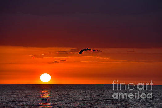 Pelican Flying at Sunset by Catherine Sherman