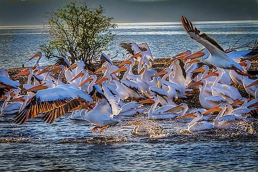 Pelican Island by David Wagenblatt