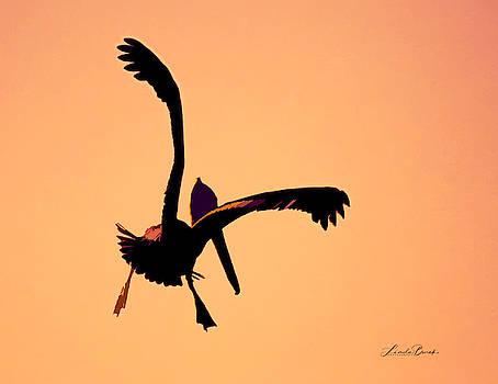 Pelican by Linda Burek
