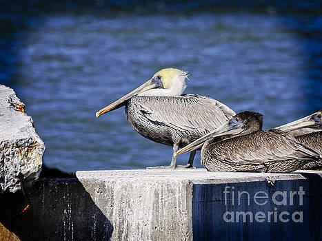 Pelican Perch by Ella Kaye Dickey