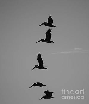 Pelican Silhouette  by Jeni Gray