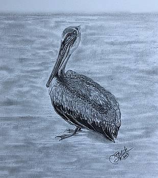 Pelican Watch by Tony Clark