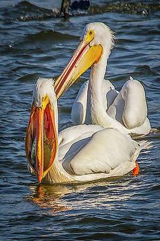 Pelican with Crappie by David Wagenblatt