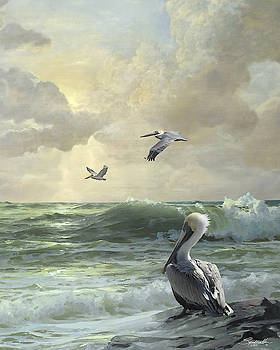 Pelicans in Florida Surf by Spadecaller
