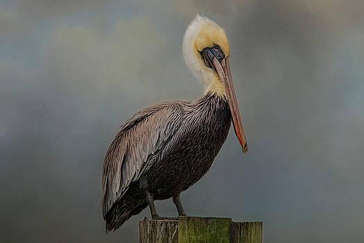 Pelican's Perch by Kelley Parker