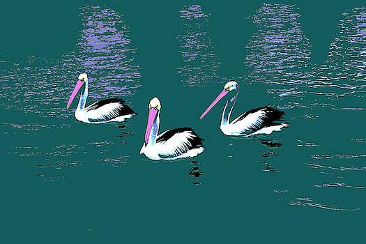 Pelicans Three - Pop Art by Lexa Harpell
