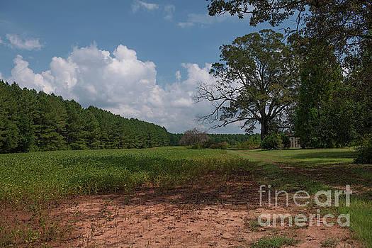 Dale Powell - Pendleton Farm Land