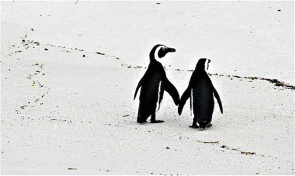 Penguin Couple by FD Graham