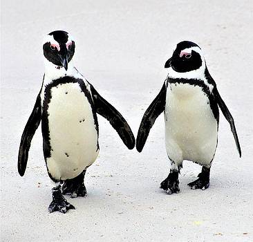 Penguin Pair by FD Graham