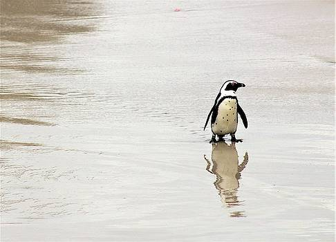 Penguin Reflection by FD Graham