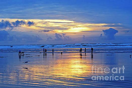 people recreation fun dog digging razor clams low tide ocean beach radiant blue gold sunset USA by Robert C Paulson Jr
