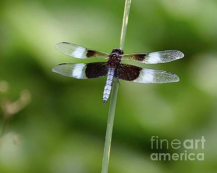 Cindy Treger - Dragonfly Perfection