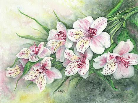 Peruvian Lilies by Lori Taylor
