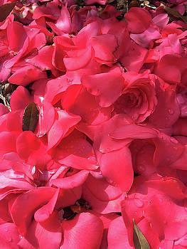 Petals Of Love by Matthew Seufer