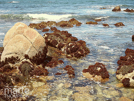 PacGrove Tidepools by Marte Thompson