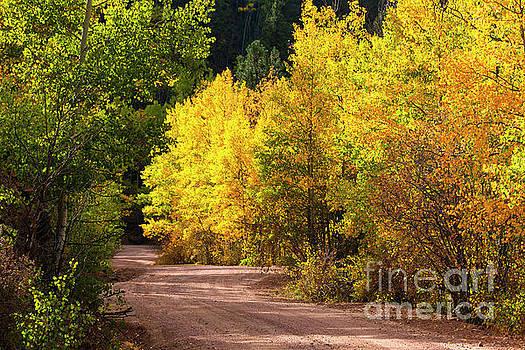Phantom Canyon Colorado in Autumn by Steve Krull