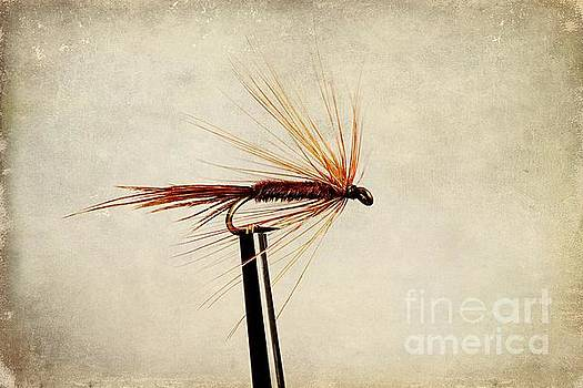 Pheasant Tail Dry Fly by John Edwards