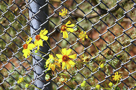Phoenix Arizona Papago Park Blue Sky Red Rocks Scrub Vegetation Yellow Flowers 3182019 5327 by David Frederick