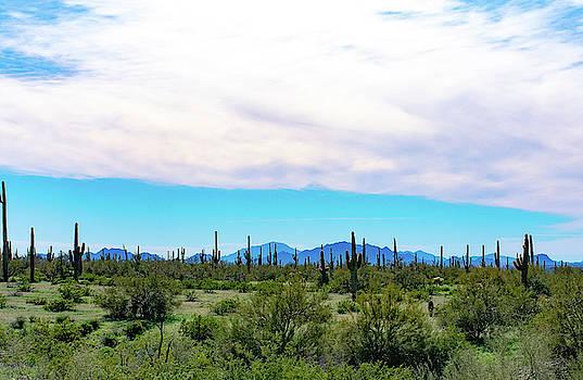 Picacho Peak 4 by Melisa Elliott
