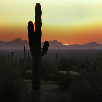 Picacho Peak Sunset Square by David T Wilkinson