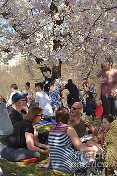 Picnic in the Park - Central Park in Spring by Miriam Danar