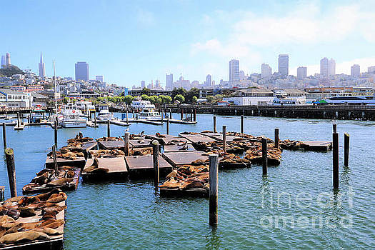 Pier 39 Sea Lions Of San Francisco by Diann Fisher