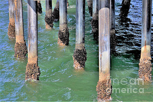 Diann Fisher - Pier Piling Abstract