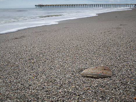 Pier Seashell by David Palmer