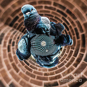 Pigeon Planet. Tiny World Photo by Stephen Geisel