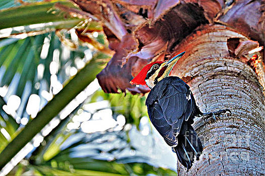 Diann Fisher - Pileated Male Woodpecker