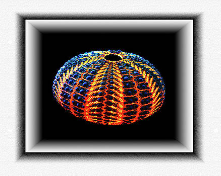 Pin Cushion Sea Urchin Shell 2 by Richard Risely
