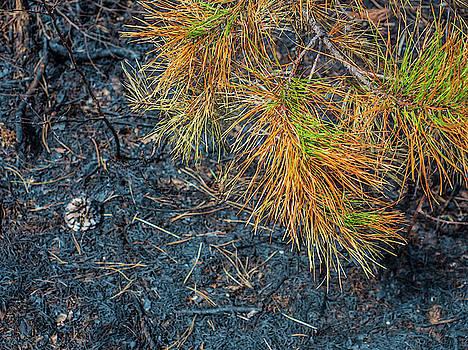 Louis Dallara - Pine Barrens Burn