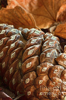 Pine Cone of the Female Persuasion by Susan Warren