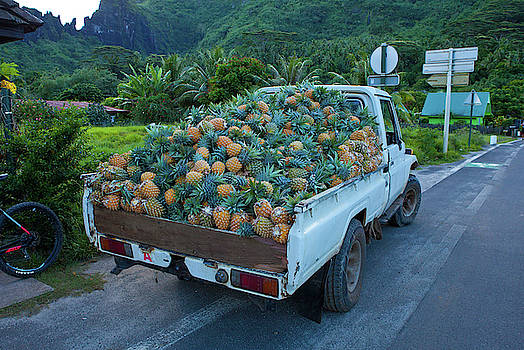 Pineapple Truck  by Angelina Hills