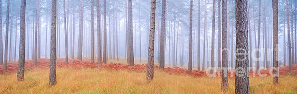 Pinewood vista by Colin Roberts