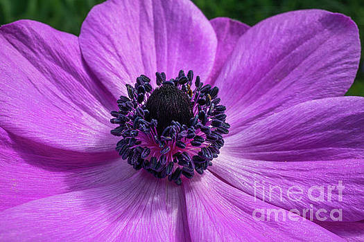 Pink Delight by Linda Howes