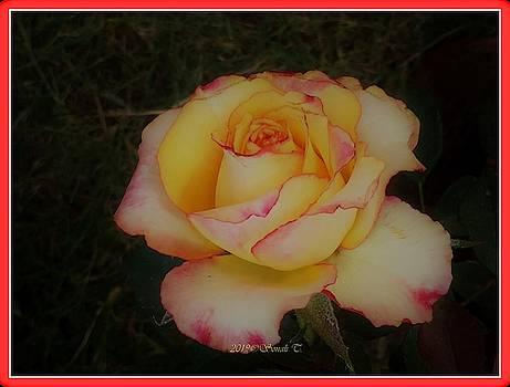 Pink Edge by Sonali Gangane