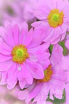 Regina Geoghan - Pink Japanese Anemone Art