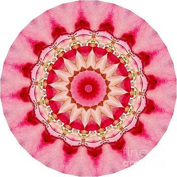 Pink Mandala by Susan Rydberg